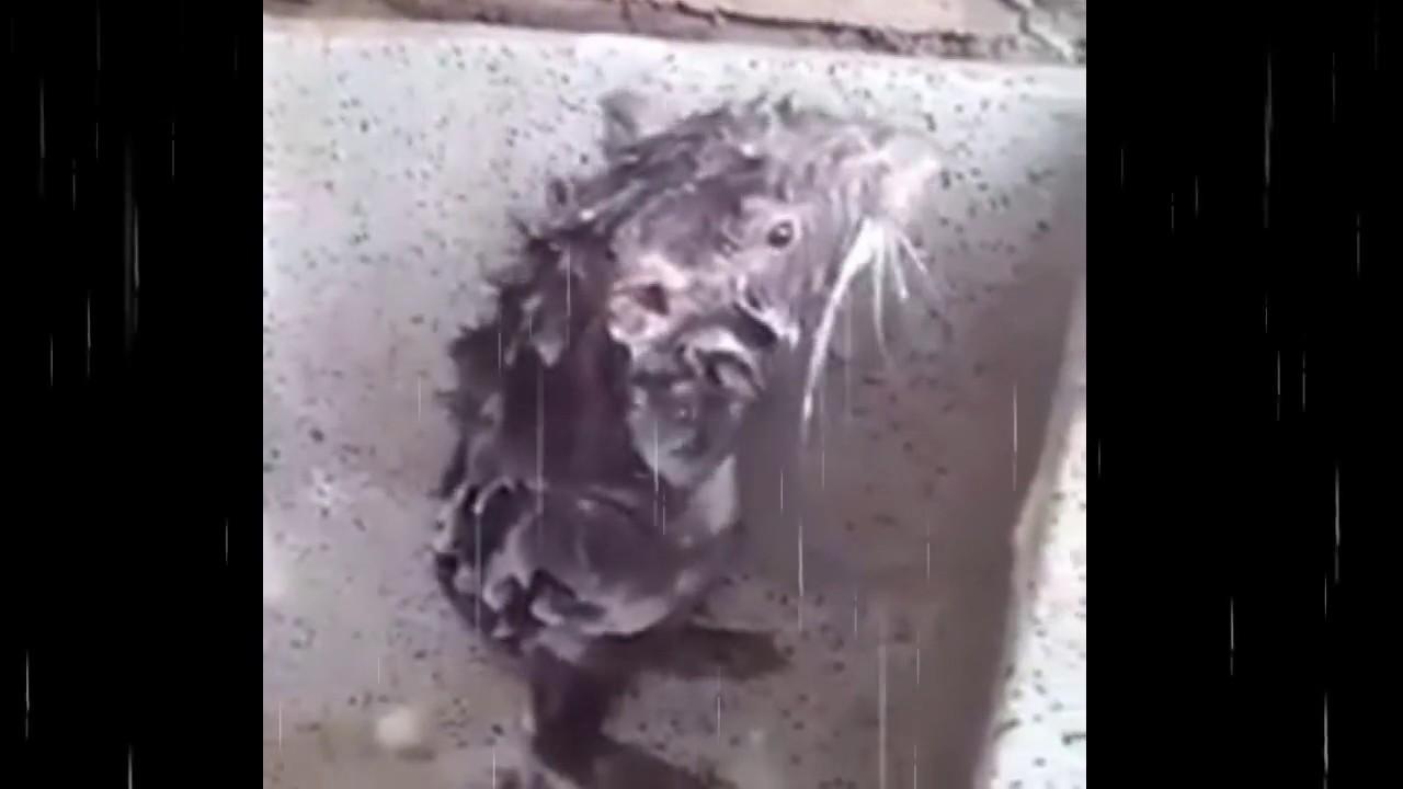 Katrina with photo in bathroom salman in naked