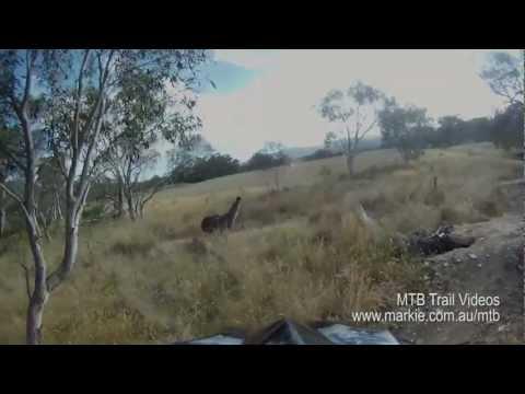 GoPro video of Mountain Bike Emu attack