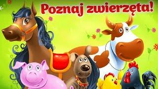 Let's Play • Zwierzęta hodowlane dla dzieci • po Polsku,  Nauka zwierzątek, bajki, Gry dla dzieci