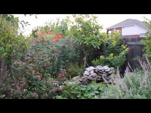 Lisa's Landscape And Design: Drought Tolerant Plants: Part 1