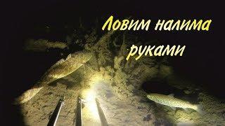 Ловим налима ночью руками / Catch burbot at night hands