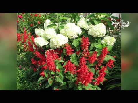 Садовые композиции  Подбираем цветочные пары. Сайт Садовый мир