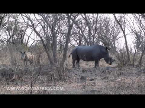 Matobo National Park - rhino tracking en wandelsafari