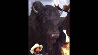 Talking Bison
