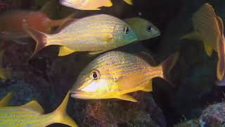 Багамские острова/BBC