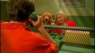 Video Pushing Daisies (clip) - Olive's pie with special filling download MP3, 3GP, MP4, WEBM, AVI, FLV Agustus 2017