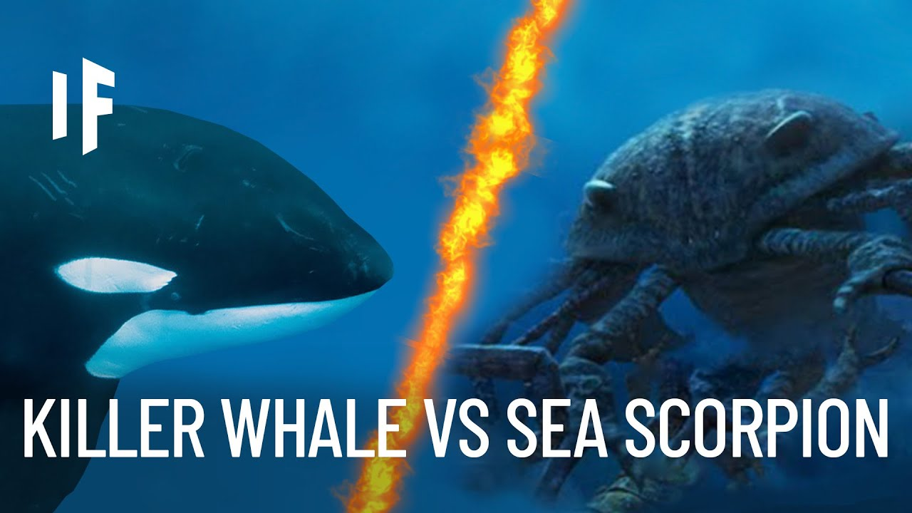 What If a Giant Sea Scorpion Fought a Killer Whale?
