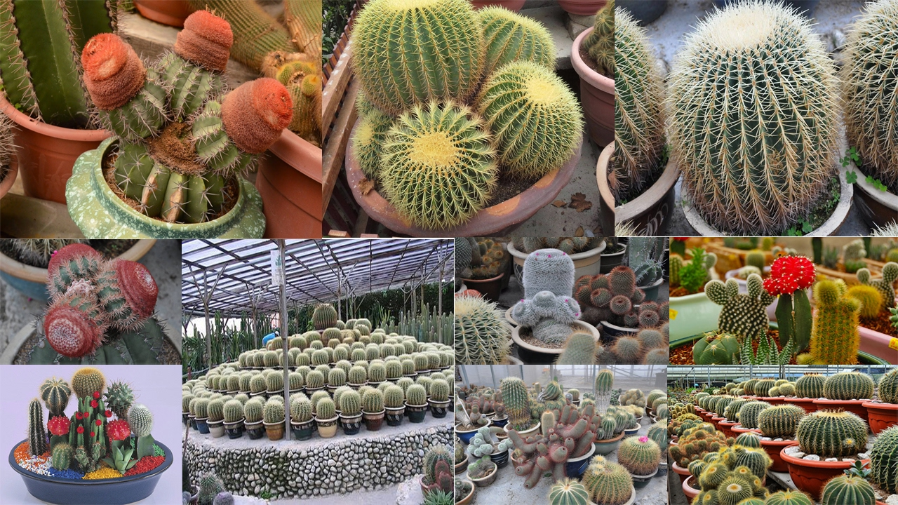 Charming Indoor Cactus Garden Cactus Garden Ideas Cactus Plants In Pots Cactus  Valley Cameron Highland