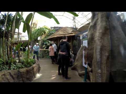 Lincoln Park Zoo 02 18 2017 Regenstein Small Mammal Reptile House