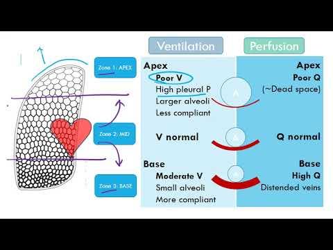 Ventilation Perfusion Video