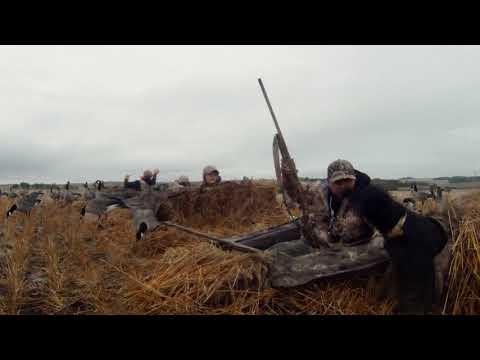 The Wild - Waterfowl - Alberta 2018 Part 1