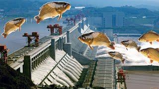 Đập Tam Hiệp xả lũ | cá đổ về hạ nguồn nhiều đến mức tràn lên cả bờ P2 | douyin tik tok