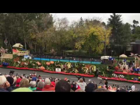 Surfing dogs at the Rose Bowl parade 2017
