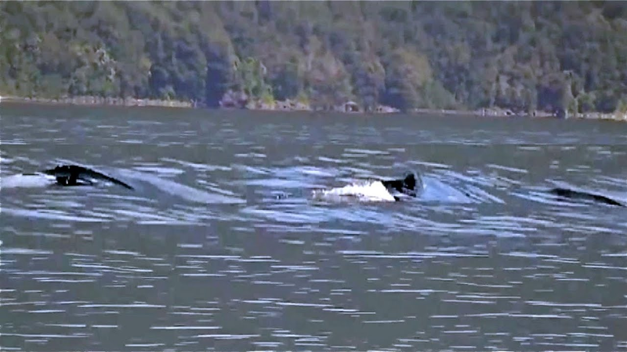 The Loch Ness Monster caught on Camera - YouTube