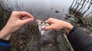 Рыбалка на фидер   фидерная рыбалка в ноябре   фидерная ловля ляща   рыбалка 2020