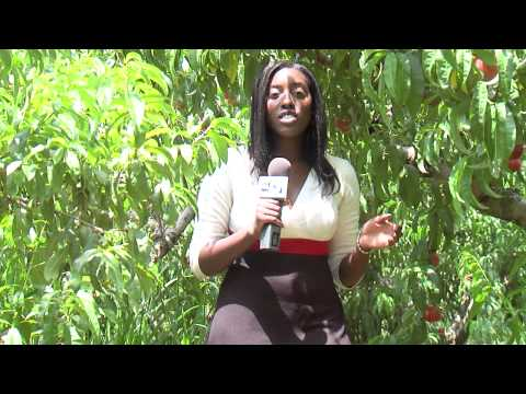 Jessica Young Peach News Package-WSET-TV