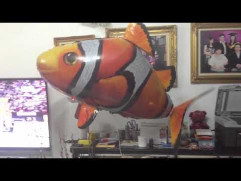Caught video of flying fish in my house!