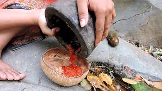 Primitive Technology - Grilled octopus at river side - Cooking octopus on rock eating delicious