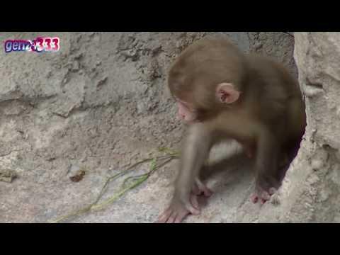 Cute Animals : Baby animal