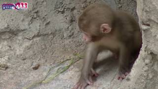 Repeat youtube video Cute Animals : Baby animal