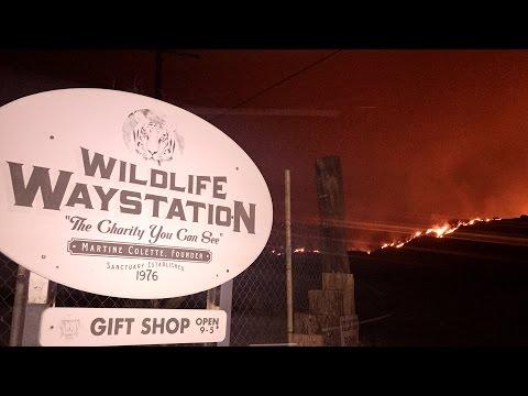 Wildlife Waystation Sand Fire Evacuation Little Tujunga California VLOG