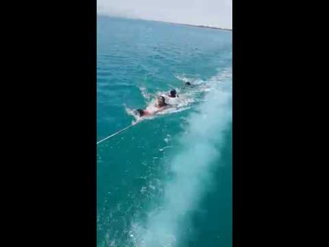 Shark attack children in Red Sea +18