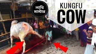 Sharif Agro's huge  bull Qurbani,Bangladesh 2017