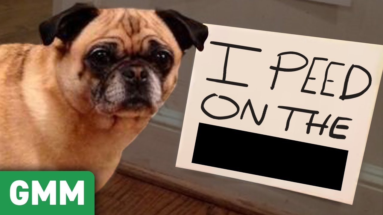 Name That Pet Shame (GAME) ft. Shameless Cast