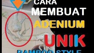 MEMBUAT ADENIUM UNIK | BAMBOO STYLE