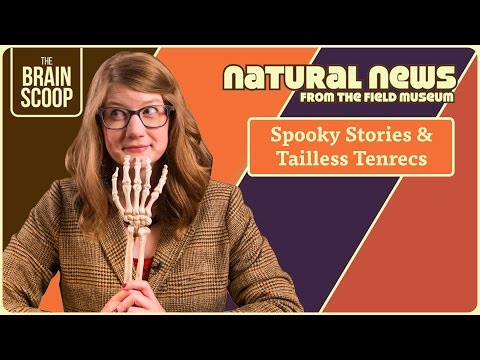 Spooky Stories & Tailless Tenrecs | Natural News from The Field Museum | Ep. 4