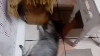 Меня пугается кошка