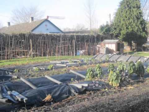 Community Garden Newtown Powys