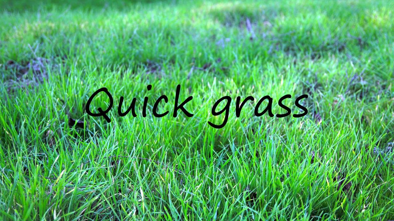 How to Pronounce Quick grass?