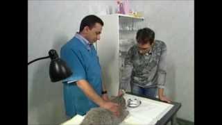 Простуда у животных(http://skysphynx.ru, http://videomore.ru., 2013-05-02T16:15:35.000Z)