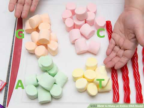 How to Make an Edible DNA Model