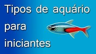Tipos de aquário para iniciantes