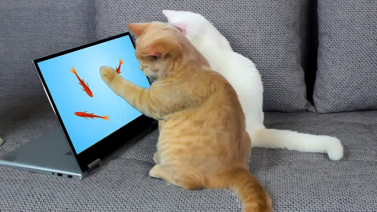 pelejä kissoille