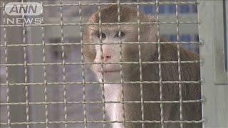 「十分な効果」サルで新型コロナワクチンの臨床試験(20/06/22)