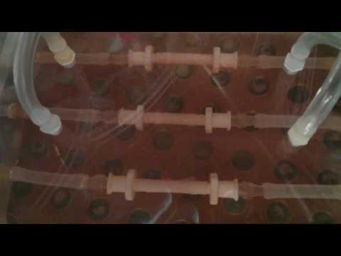 Bioreactor culture of tissue-engineered blood vessels