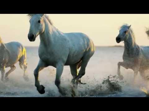 Justin Hayward - The Wind Of Heaven