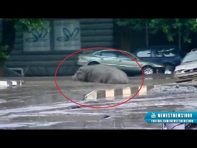 Грузинский спецназ отлавливает сбежавших животных