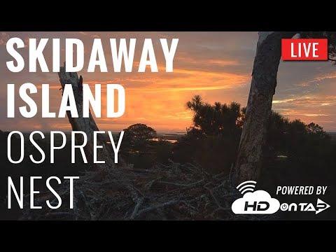Skidaway Osprey Nest - Savannah, GA