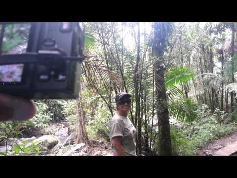 Puerto Rico Rain Forest Main