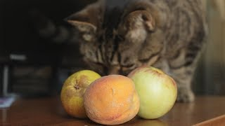 Какие фрукты можно есть,  а какие не стоит (мое личное мнение)