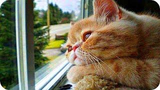 Смешные Кошки 2016! (#11) Веселая Видео Подборка! Смешные Животные 2016/
