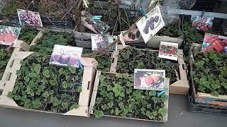 Выставка Сад-Огород проходит в Кривом Роге  -  2 апреля 2019