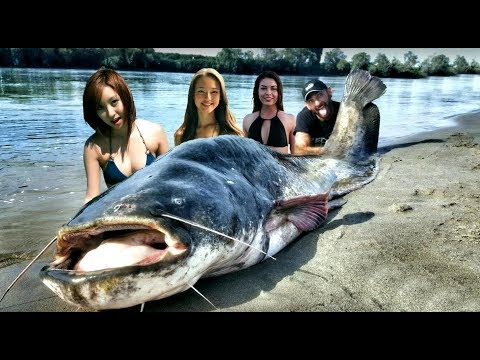 Biggest Catfish Ever from YouTube · High Definition · Duration:  2 minutes 5 seconds  · 49 views · uploaded on 10/30/2017 · uploaded by EatnLunch