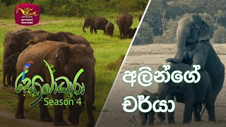 Sobadhara - Sri Lanka Wildlife Documentary | 2020-09-11 | Elephant's behaviour (අලින්ගේ චර්යා) Thumbnail