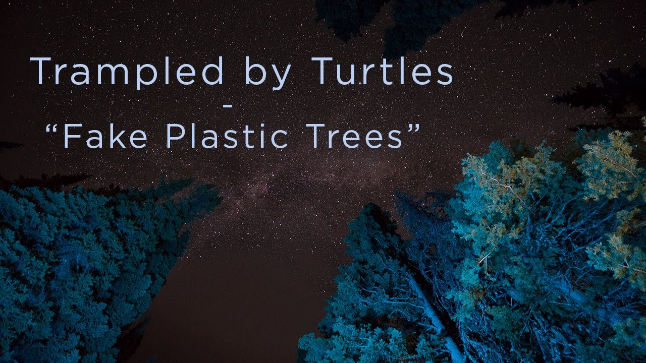 Fake Plastic Trees.Trampled By Turtles Fake Plastic Trees Radiohead Cover Official Video