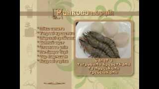 Утренняя порция. Салат с креветками и гребешками.